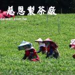 慈恩製茶廠 2016