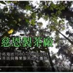 樂菁慈恩製茶廠 2019年春